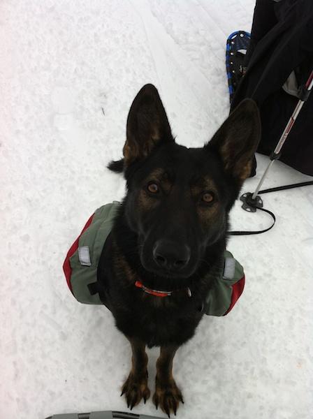 Dog Backpack Keji
